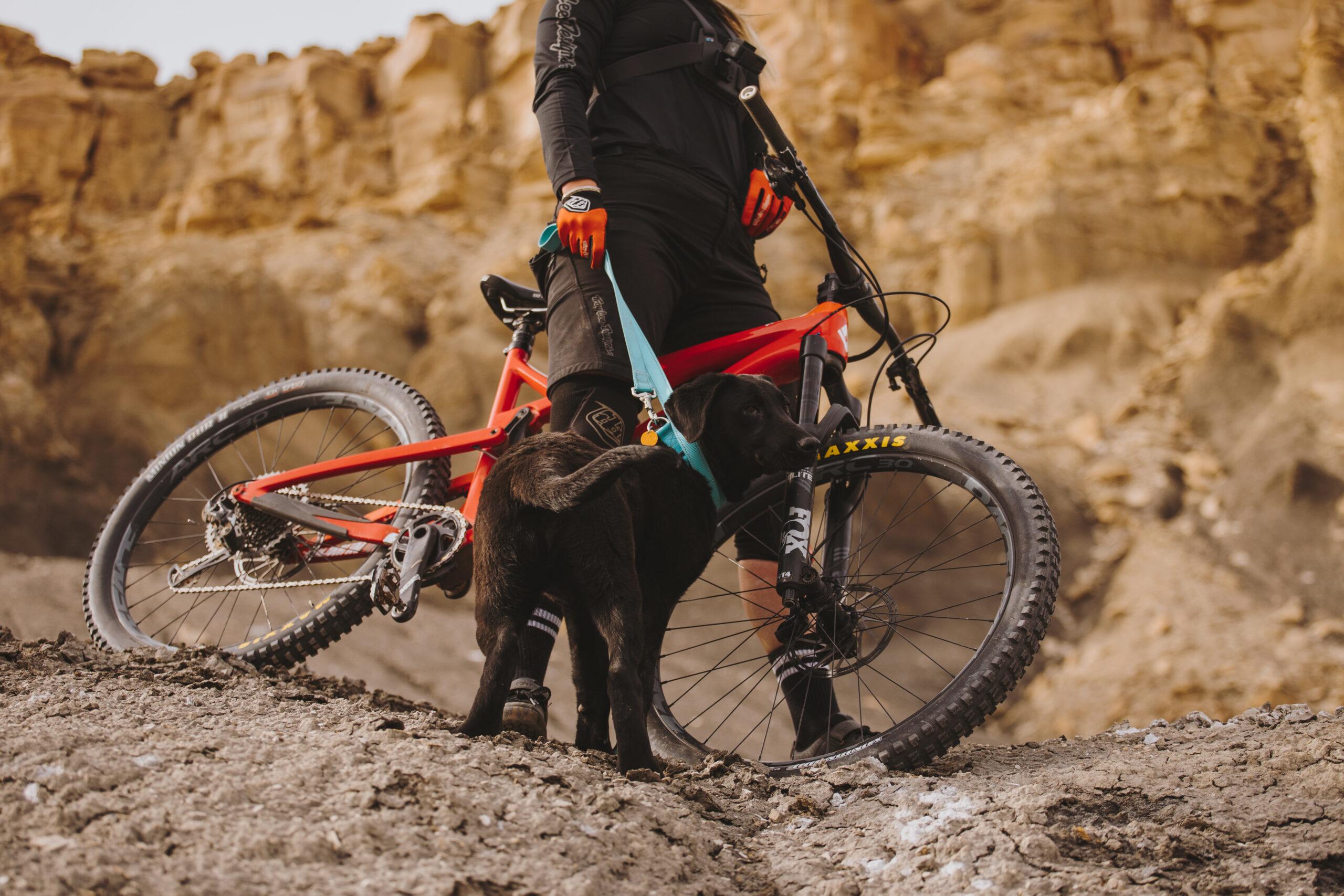 Diamondback Bikes - Orange Spec